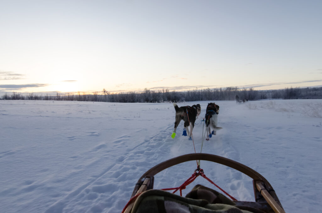 On the husky ride with Tana Husky in Norway