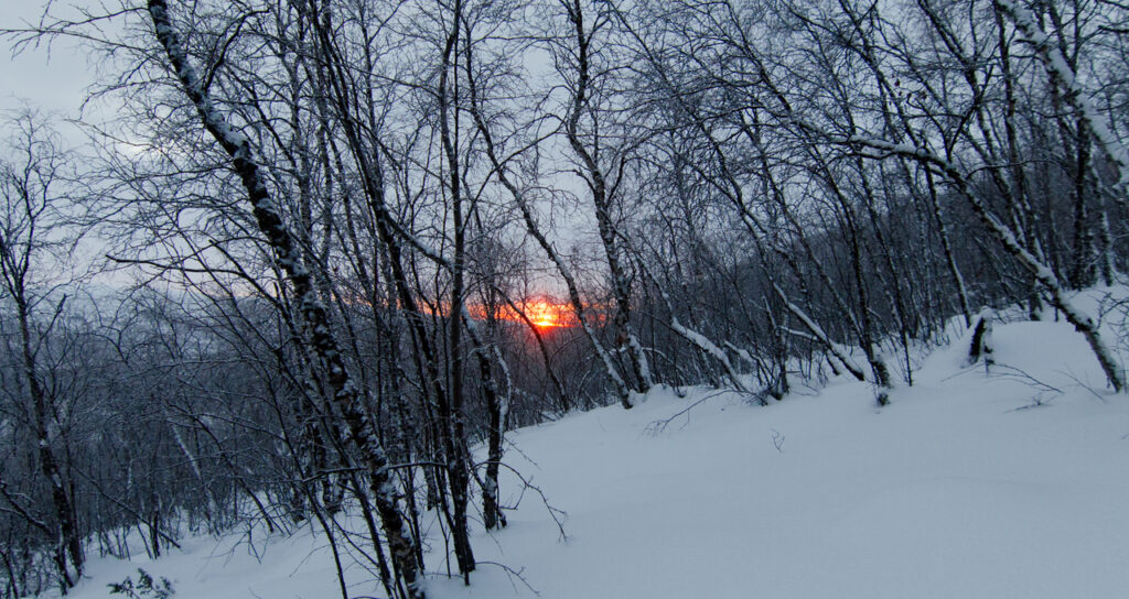 Watching the sun rise through the forest during the snowshoe hike up a fell