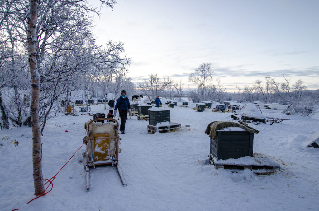 Tana Husky farm with 42 dogs and their kennels. You can hear the dogs from a kilometer away