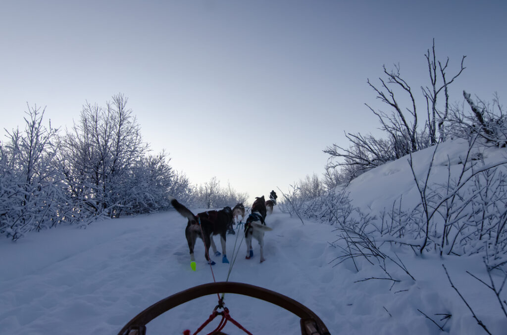 And we're off! Starting with climbing uphill. Look at those cute little dog booties